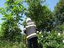 Likvidace hmyzu 17.6.2013