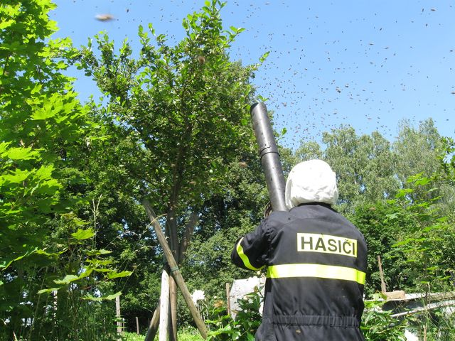 Likvidace nebezpečného hmyzu