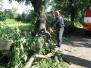 Spadlý strom ul. V Aleji 6.7.2012