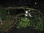 Spadlý strom v ul. Na Obci 22.6.2011