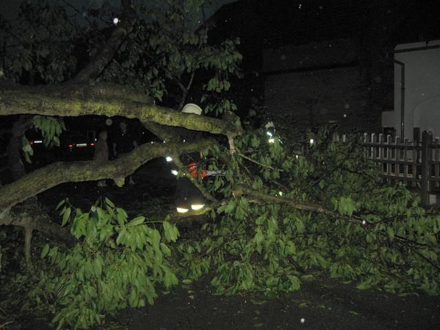 Odstraňování spadlého stromu v ul. Na Obci